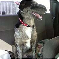 Adopt A Pet :: Abagaile in OK - Oklahoma City, OK