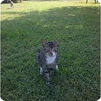 Adopt A Pet :: cashew - Murfreesboro, TN