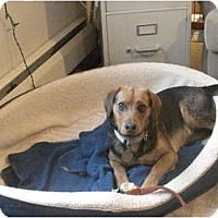 Adopt A Pet :: Joey - Douglas, MA