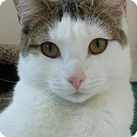 Adopt A Pet :: Jim Carey - Richboro, PA
