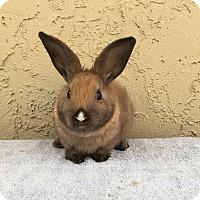 Adopt A Pet :: Sechwan - Bonita, CA
