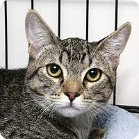 Adopt A Pet :: Baboo - Yorba Linda, CA