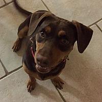 Adopt A Pet :: Reesie - Beaumont, TX