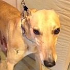 Adopt A Pet :: Coddia
