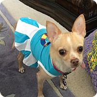 Adopt A Pet :: Lizzie, formerly Frenchie - Delaware, OH