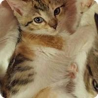 Adopt A Pet :: Shelly - New Smyrna Beach, FL