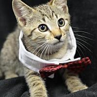 Adopt A Pet :: Jerry 170993 - Atlanta, GA