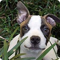 Adopt A Pet :: Sonny - Valley Stream, NY
