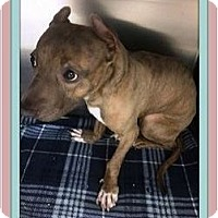 Adopt A Pet :: Lizzy (Special Needs) - Rancho Cucamonga, CA