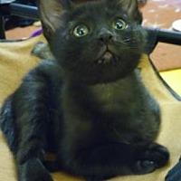 Adopt A Pet :: Fiona 6 - Bulverde, TX