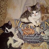 Adopt A Pet :: Wiley - Texarkana, AR