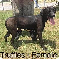 Adopt A Pet :: Truffles - Waycross, GA