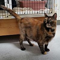 Adopt A Pet :: Spicy - Diamond Springs, CA