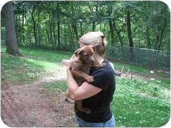 American Pit Bull Terrier Mix Puppy for adoption in Minneapolis, Minnesota - Jada