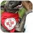 Photo 1 - Terrier (Unknown Type, Medium)/Boston Terrier Mix Dog for adoption in Athens, Georgia - Jersey