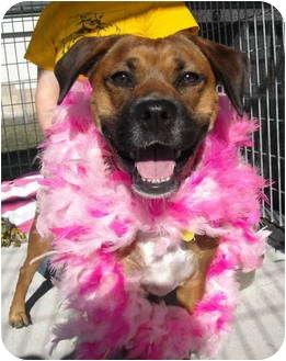 Boxer Mix Dog for adoption in Corpus Christi, Texas - Mia
