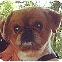 Adopt A Pet :: Rudee-VA - Suffolk, VA