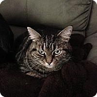 Adopt A Pet :: Sasy - Monroe, GA