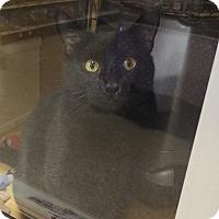 Adopt A Pet :: ECLIPSE - Diamond Bar, CA