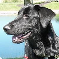 Adopt A Pet :: WonTon - Lewisville, IN