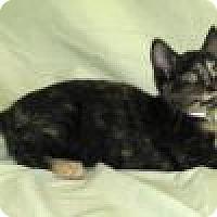Adopt A Pet :: Primrose - Powell, OH
