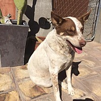 Adopt A Pet :: Lincoln / Courtesy Posting - Tucson, AZ
