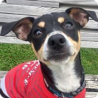 Adopt A Pet :: George Harrison - Austin, TX