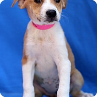 Adopt A Pet :: Cashmere - Waldorf, MD