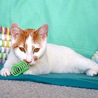 Adopt A Pet :: Tax
