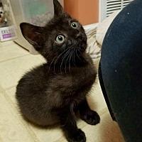 Adopt A Pet :: Magic-Fostered - Rustburg, VA
