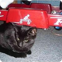 Adopt A Pet :: Breanna - Solon, OH