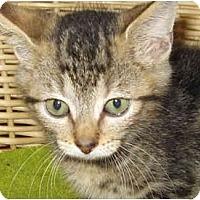 Adopt A Pet :: Mel - Catasauqua, PA