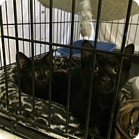 Adopt A Pet :: Maxi - Byron Center, MI