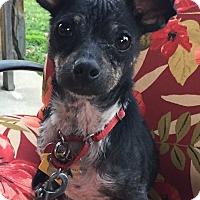 Adopt A Pet :: *URGENT* Dodger - Van Nuys, CA