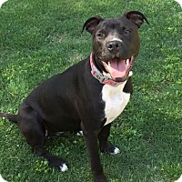 Adopt A Pet :: Bentley - Chattanooga, TN