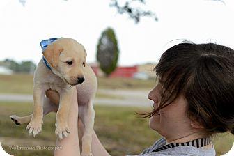 Labrador Retriever Mix Dog for adoption in Muldrow, Oklahoma - Toby