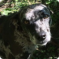 Adopt A Pet :: Sophia - WI - Warren, ME