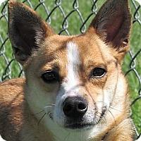 Adopt A Pet :: Lyla - Germantown, MD