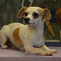 Adopt A Pet :: Mozart - Kansas city, MO