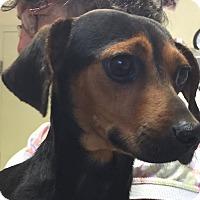 Adopt A Pet :: Courtesy: Skippy - McCormick, SC