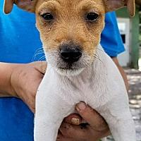 Adopt A Pet :: Georgia #3M - Osteen, FL
