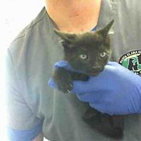 Adopt A Pet :: BRUCE - San Martin, CA