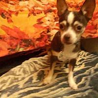Adopt A Pet :: *APRIL - Upper Marlboro, MD