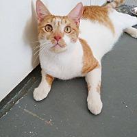 Adopt A Pet :: Brody - Umatilla, FL