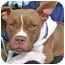 Photo 1 - American Pit Bull Terrier/Boxer Mix Dog for adoption in Troy, Michigan - Rose