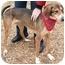 Photo 3 - Greyhound/German Shepherd Dog Mix Dog for adoption in Cincinnati, Ohio - Noodle