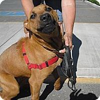 Adopt A Pet :: Jasper - Wickenburg, AZ