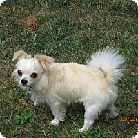 Adopt A Pet :: Homer - Mt Gretna, PA