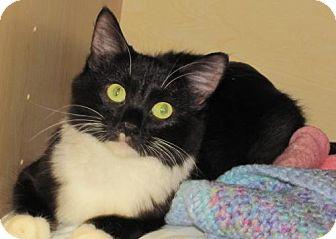 Domestic Mediumhair Cat for adoption in Port St. Joe, Florida - Senora