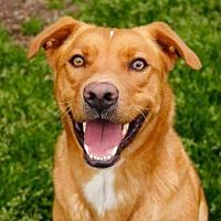 Adopt A Pet :: Hershel - Rossville, TN